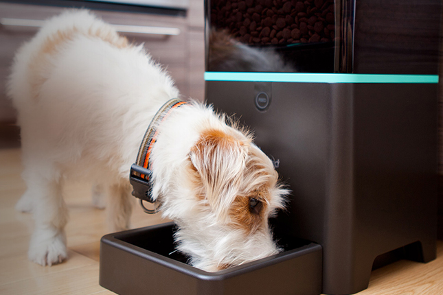 dog feeders