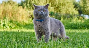 Know About Flea Collars For Cats